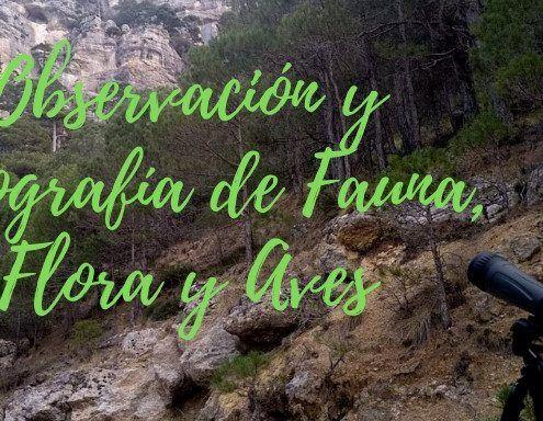 observación-fotografía-fauna-flora-aves